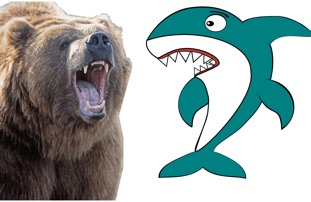 Bear Vs Sharks