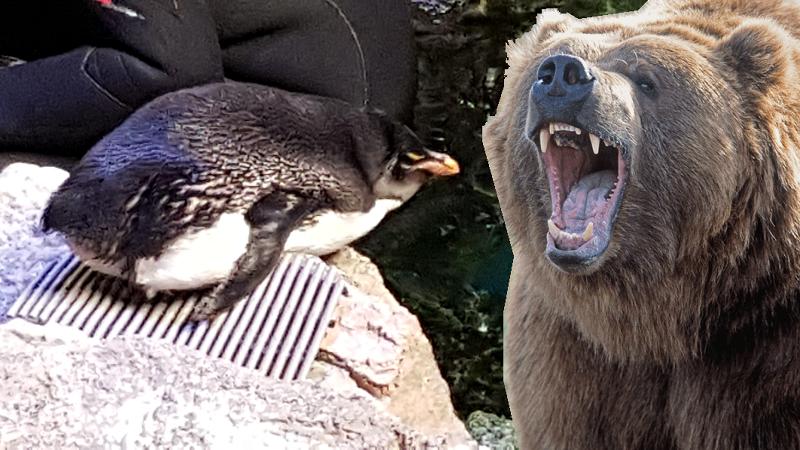 Bruins vs Penguins